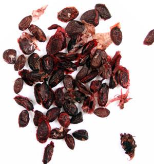 Black-currant-seeds-chop moi