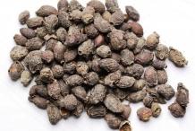 Black-plum-seeds