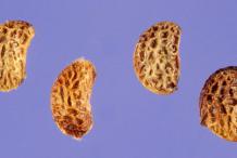 Seeds-of-Black-Raspberry