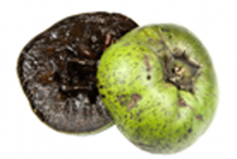 Half-cut-Black-Sapote