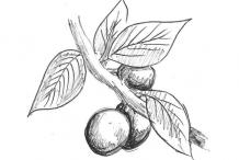 Sketch-of-Blackthorn