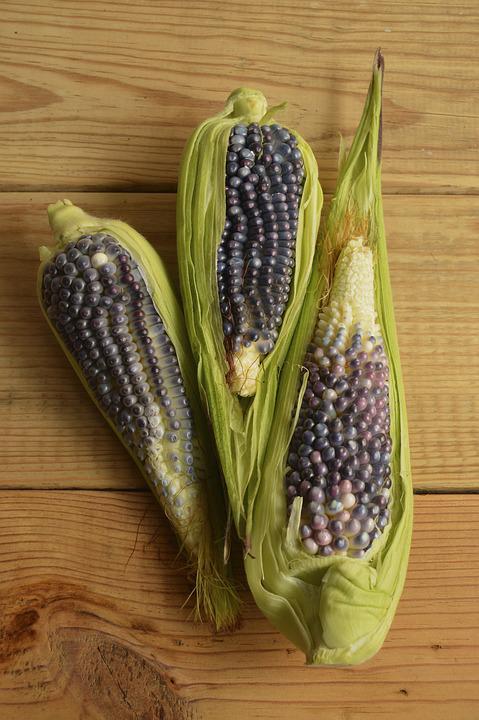 Blue-corn