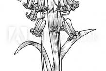 Sketch-of-Bluebell