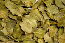 Dried-Boldo-Leaves