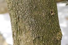 Stem-of-Boxwood-plant