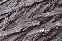 Closer-view-of-Bark