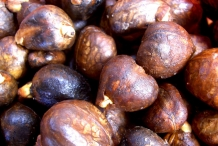 Breadfruit-seeds-1