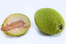 Breadfruit-cut
