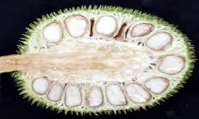 Half-cut-Breadnut