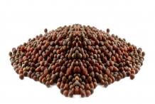 Broccoli-seeds