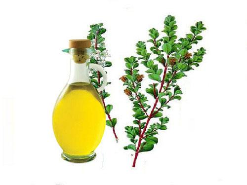 Buchu-oil