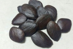 Seeds-of-Buchu