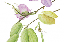 Sketch-of-Butterfly-Tree