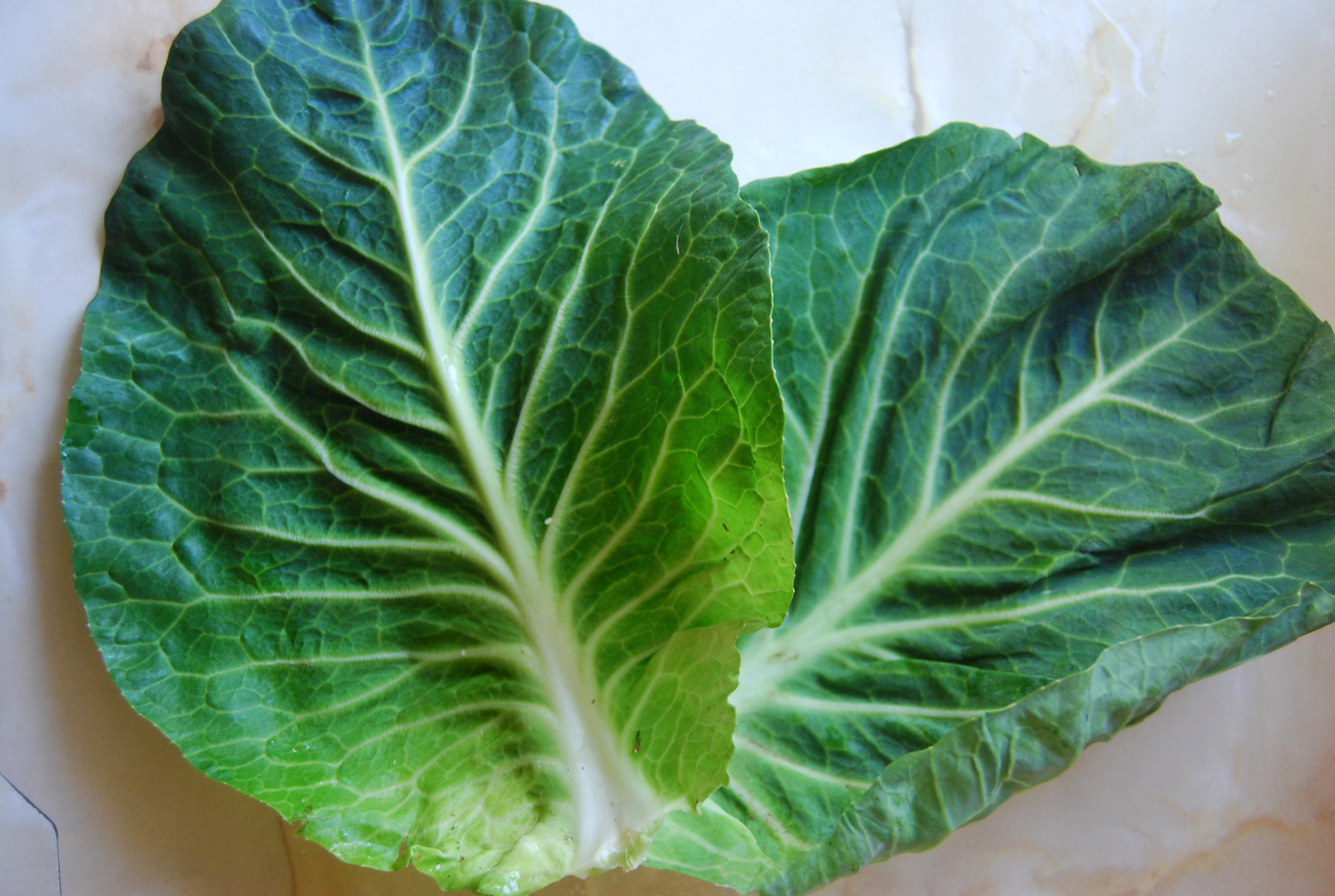 Leaves-of-Cabbage