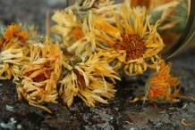 Calendula-dried