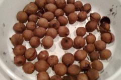 Roasted-California-Bay-nuts