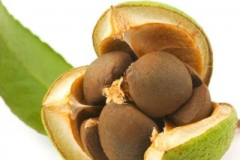 Seeds-of-Camellia