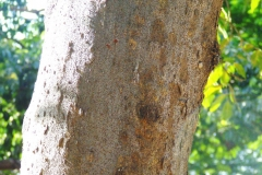 Java-Almond-bark