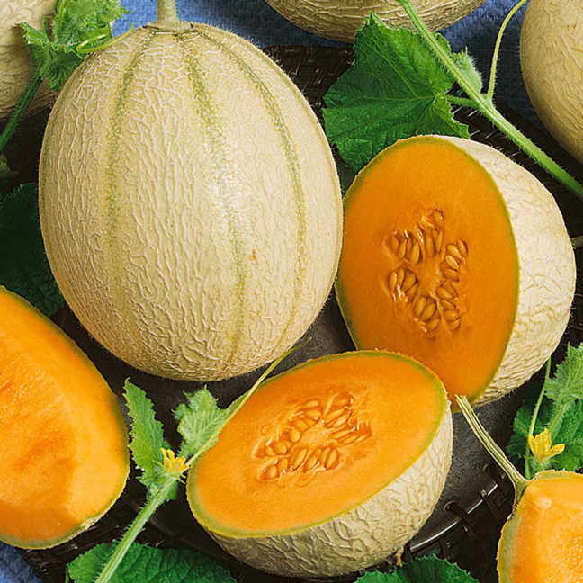Cantaloupe cut-Muskmelon