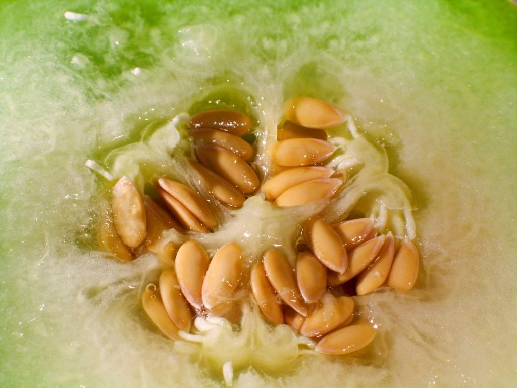 Cantaloupe seeds-Spanspek