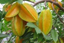 Carambola-fruit