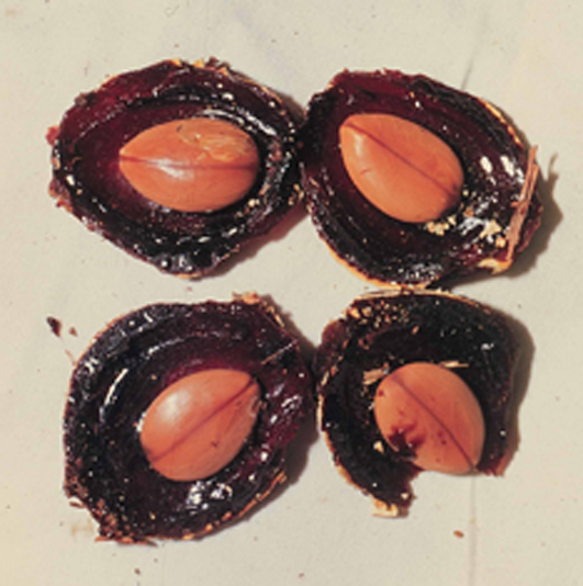Carao-fruit-showing-flesh-and-seeds