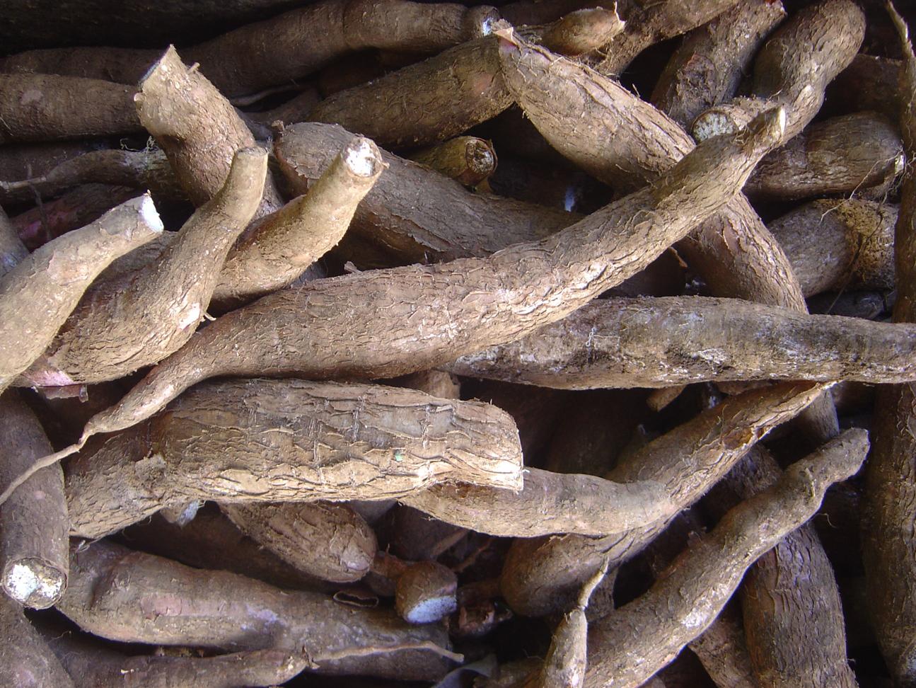 Health benefits of cassava - Cassava Root