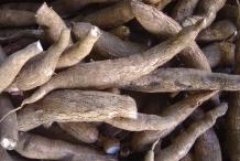 Cassava-root