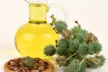Castor-Beans-oil