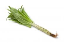 Celtuce-plant