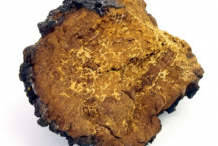 Image-showing-flesh-of-Chaga-mushroom
