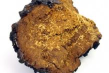 Image-showing-flesh-of-Chaga-mushroom