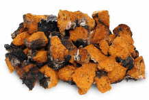 Small-chunks-of-chaga-mushroom