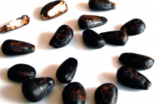 Cherimoya-Seeds
