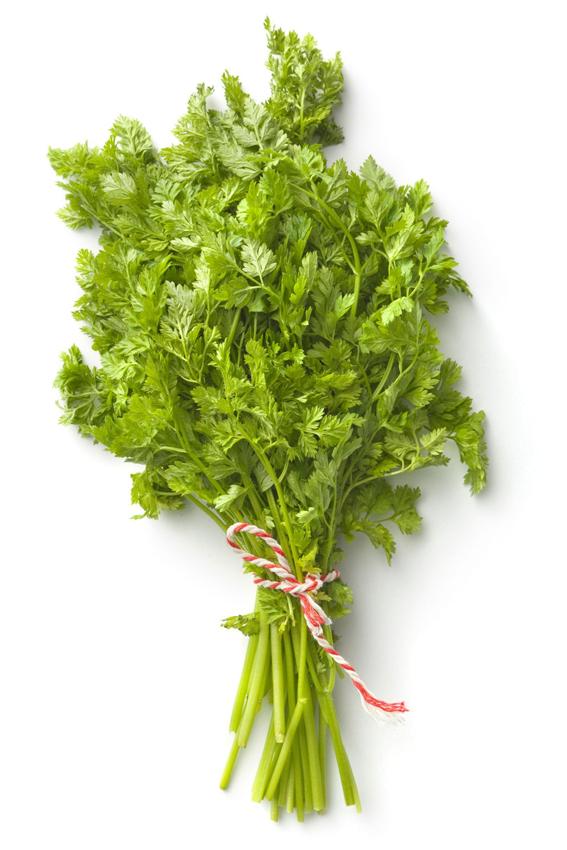 Bunch-of-Chervil-plant