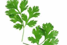 Chervil-Leaves
