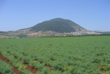 Chickpea-farming
