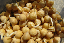 Sprouted-Chickpeas