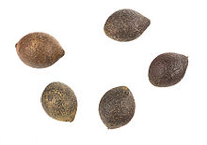 Seeds-of-Chile-hazel