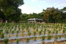 Chili-farm