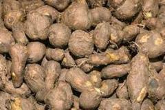 Tubers-of-Chinese-Potatoes