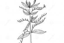 Sketch-of-Chiretta