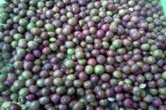 Harvested-Chironji-fruit