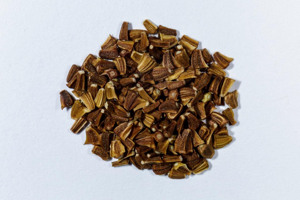 Chrysanthemum-seeds