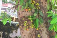 Cluster-fig-trunk