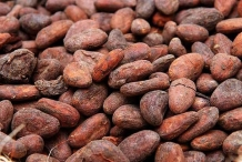 Cocoa-bean-seeds