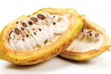 Cocoa-bean-fruit-cut