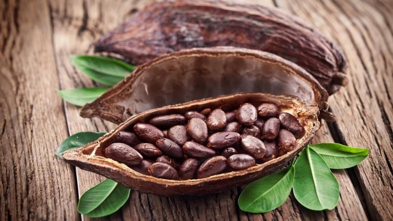 Cocoa-fruit-open