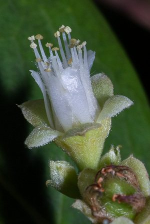 Closer-view-of-Flower