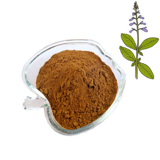 Root-Extract-of-Coleus-forskohlii